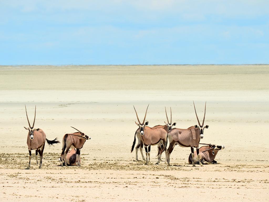 Avant de partir en Namibie