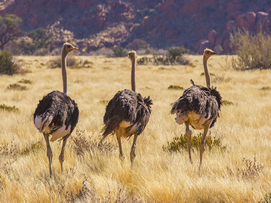 infos pratiques de Namibie