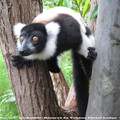 Bienvenue au Pays des MoraMora, Madagascar!