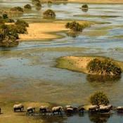 Découvrir le Delta de l'Okavango