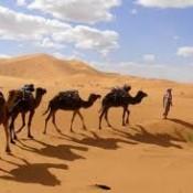 Envisagez un voyage à Marrakech !