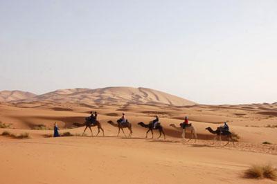 dromadaire-marrakech