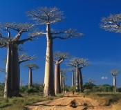 Madagascar: une visibilité accrue aux yeux des touristes anglophones