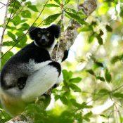 Voyage à Madagascar: de l'imaginaire à la réalité…