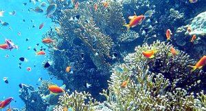 corail-caraibes