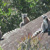 Partir en randonnée et trekking avec «Harlin» dans des massifs, vallées et forêts au Sud; Sud-Est de Madagascar