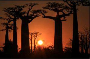 allee-des-baobab