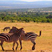 Voyage en Afrique : que faire pour se protéger du soleil?