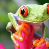 Voyage Costa Rica: organiser son séjour le plus efficacement