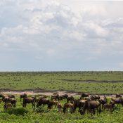 Safari dans le Nord de la Tanzanie : Les réserves à ne pas manquer