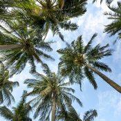 Visiter Nice avec l'agence de voyage «Nice Azur Visit»