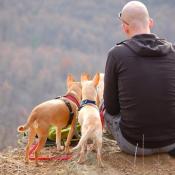 Comment partir en camping avec votre chien ?