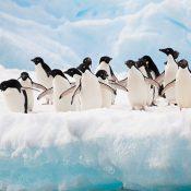 Découvrez l'Antarctique pendant une croisière