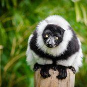 Pourquoi faire appel à un chauffeur guide à Madagascar