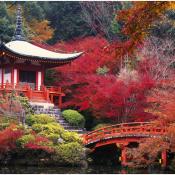 Pourquoi vous devez partir en voyage au Japon une fois dans votre vie
