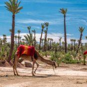 Découvrez la beauté de Marrakech et le désert Marocain