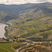 La Vallée du Douro, l'incontournable visite à faire à Porto