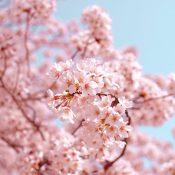 3 Raisons de visiter le japon au moins une fois dans sa vie