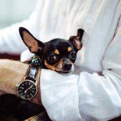 Comment voyager avec un chien sans problème ?
